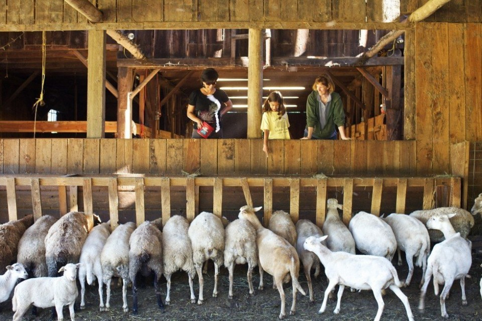Reprinted: Can You Make Money With Sheep?